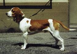 sz niedlerlaufhund